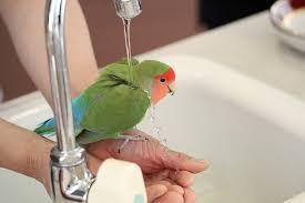 羽根の水弾き